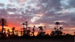 La Palmeraie de Marrakech au couché du soleil